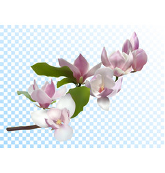 Magnolia branch isolated spring flower tree bloom vector