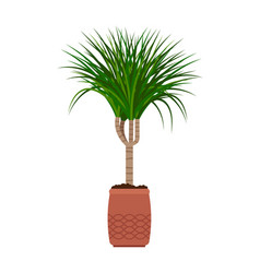 dracaena house plant vector image vector image
