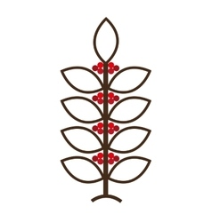 coffee plant natural icon vector image