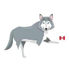 big wolf with canadian flag icon vector image
