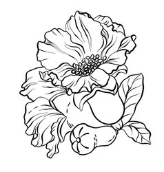 black-and-white graphic with pomegranate flowers vector image