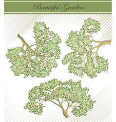 Detailed branches of trees vector image
