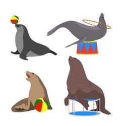 circus seals Set Cartoon vector image