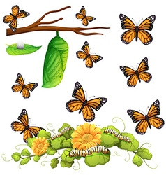 Different stages of butterfly vector