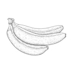 Banana hand drawn black and white sketch vector