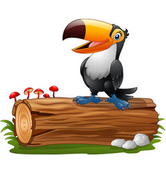 cartoon funny toucan standing on tree log vector image