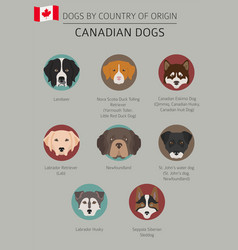 Dogs country origin canadian breeds vector
