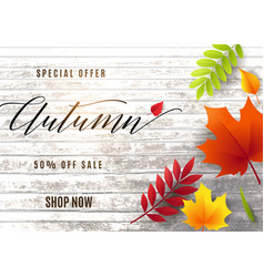 fashion autumn sale banner vector image