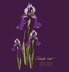 hand drawing irises on a purple background vector image