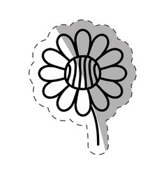 flower daisy ornament monochrome vector image vector image