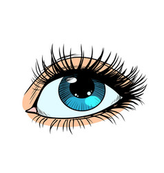 Female eyes with blue pupil vector