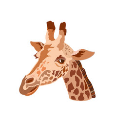 Giraffes head vector