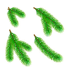green fir branch isolated on white background vector image