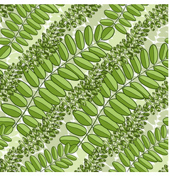 Green seamless pattern with acacia leaves spring vector