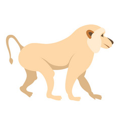 Japanese macaque icon isolated vector