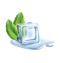 Realistic ice cube with mint green leaves vector