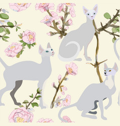 Three gray siamese or sphinx cats in sakura vector