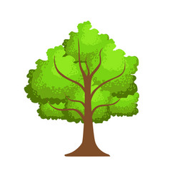 tree with green leaves element of a landscape vector image vector image