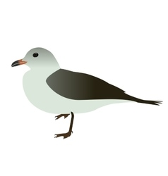 Seabird seagull Isolated on White background vector image