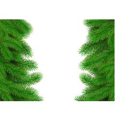 green fir branches border christmas tree twig vector image