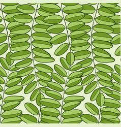 Seamless pattern with acacia leaves spring vector