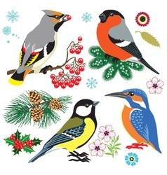 Set of wild birds vector