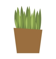 Spring colorful garden grass in pot vector image