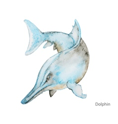 Dolphin water color vector