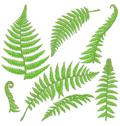 Green fern leaves sketch vector