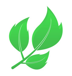 green leaves eco friendly symbol vector image