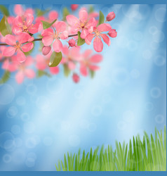 Pink blossoming cherry branches and green grass vector