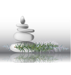 Rosemary herb leaves with stones vector