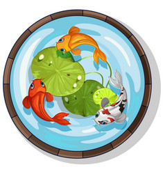 Three kois swimming in small pool vector