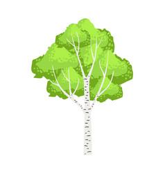 green birch tree colorful cartoon vector image vector image