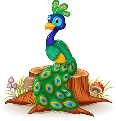 Cartoon peacock on tree stump vector image