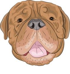 Dogue de Bordeaux vector image