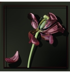 Image of Tulip faded vector image