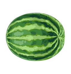 Ripe watermelon vector