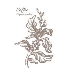 Coffee sketch art branch 6 vector