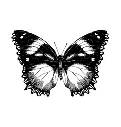 Hand drawn butterfly on white background vector