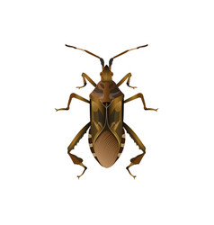 western conifer seed bug vector image