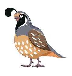 cartoon happy quail vector image