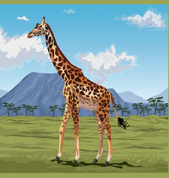 colorful scene african landscape with giraffe vector image