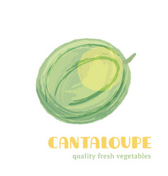fresh cantaloupe isolated on white background vector image