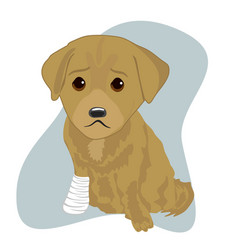 labrador puppy with an injured leg vector image