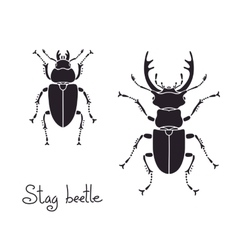 Male and female stag beetle Lucanus cervus Stag vector