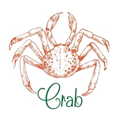 Sketch of large japanese snow crab vector image