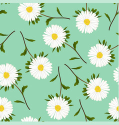 white aster daisy on green background vector image