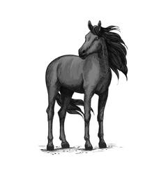 Wild black horse standing sketch vector