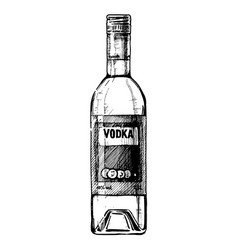 bottle of vodka vector image